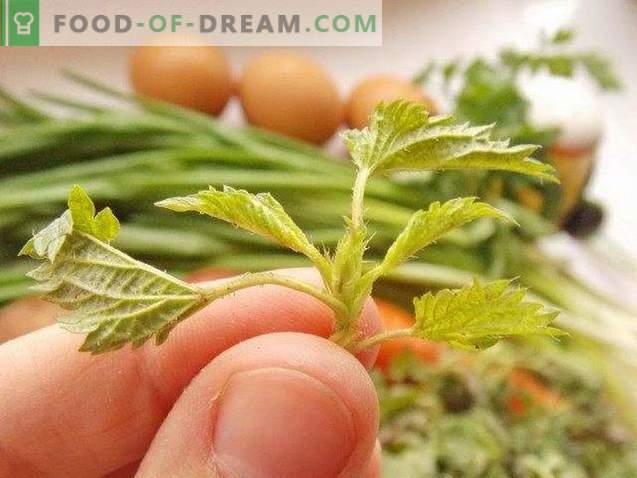 Zuppa di ortiche - la più primaverile