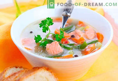 Foreles zupas - pārbaudītas receptes. Kā pareizi un gatavot foreles zupu.