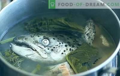 Sopa de cabeça de peixe - receitas e subtilezas culinárias. Sopas de peixe com arroz, milho, legumes