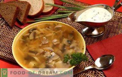 Zuppa di funghi in un fornello lento - per coloro che apprezzano il cibo delizioso. Cucinare zuppe di funghi veloci, nutrienti e gustose in una pentola a cottura lenta senza problemi