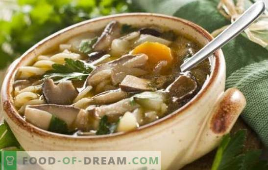 Sēņu šampinjonu zupa - viegli un vienkārši! Receptes sēņu sēņu zupai ar vistu, griķiem, makaroniem un sieru