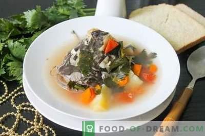 Soupe de poisson-chat - comment la cuire correctement et savoureuse (recette avec photos)